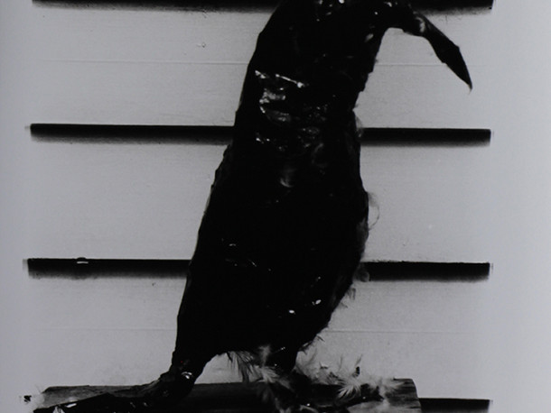 Crow, Fetish Object from Tar Baby Performance, Dillwyn Smith's Studio, West Hampstead