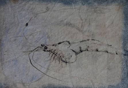 Shrimp pen study