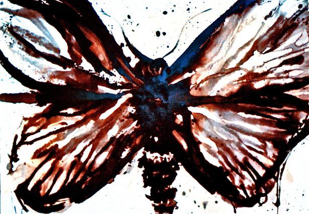 Cossid Moth