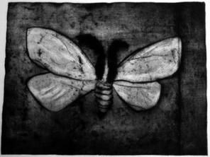 cossid moth flying at night