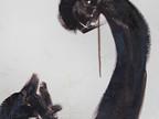 Hanging Tar Fetishes, Detail