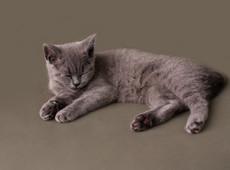 Kitten Photoshoot
