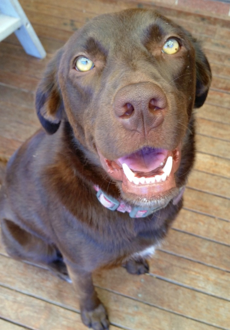 Dog friendly Jervis Bay holiday