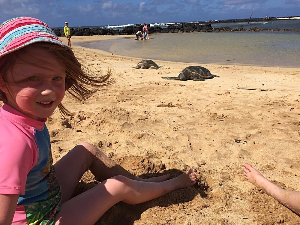 Poipu sea turtles