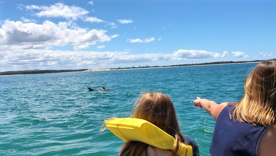 Dolphin watching Port Stephens
