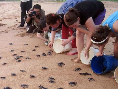 turtle farm.jpg