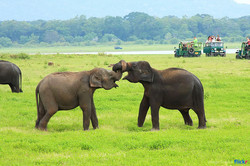 5day-elephant