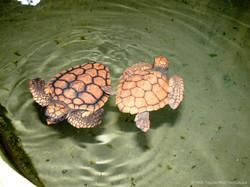 9day-turtle farm