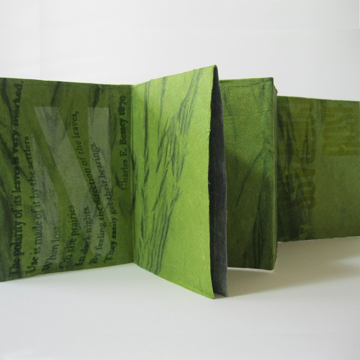 compassrosegreen interior copy