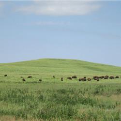 bisonhill