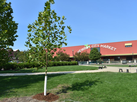Individual donors make a difference at NewBo City Market, plant new trees in yard