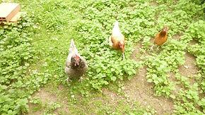 La Maison du Passant - chambres d'hotes et roulotte à chouze sur loire : cinquieme photo du jardin