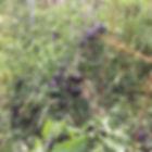 La Maison du Passant - chambres d'hotes et roulotte à chouze sur loire : premiere photo du potager