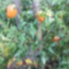 La Maison du Passant - chambres d'hotes et roulotte à chouze sur loire : troisieme photo du potager