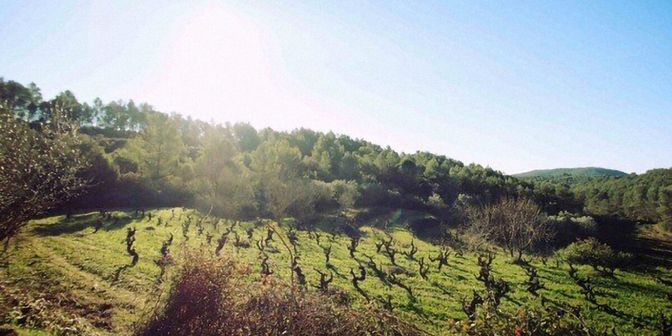 The Fertile Ground of Women Winemakers