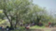 Forest Garden Top.jpg
