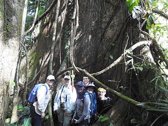 large tree with group.JPG