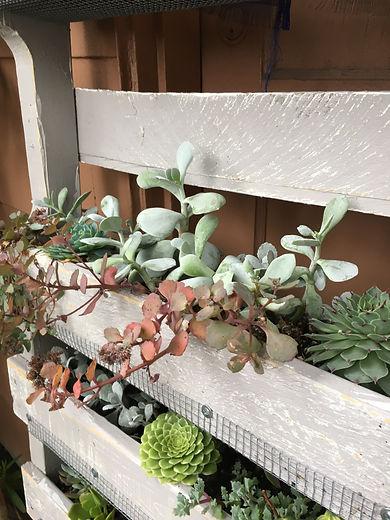 Pallet Plants.JPG