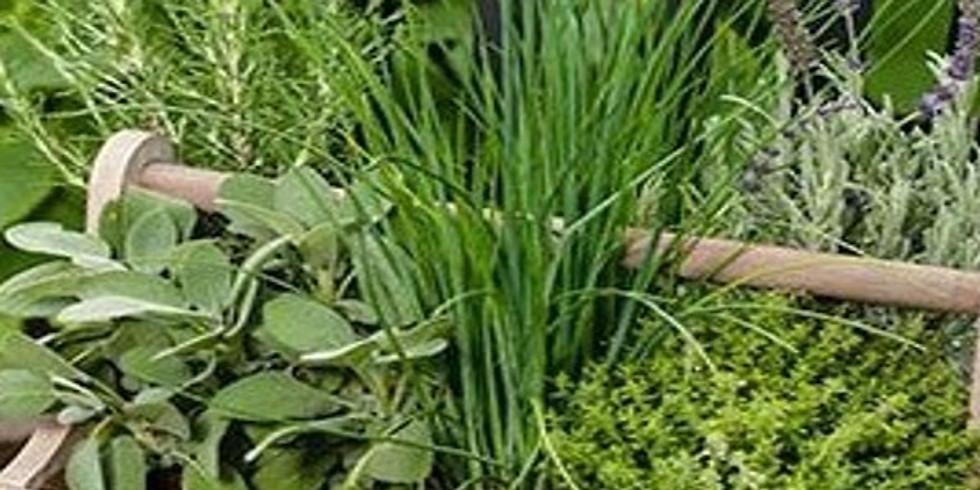 Herb Garden Class