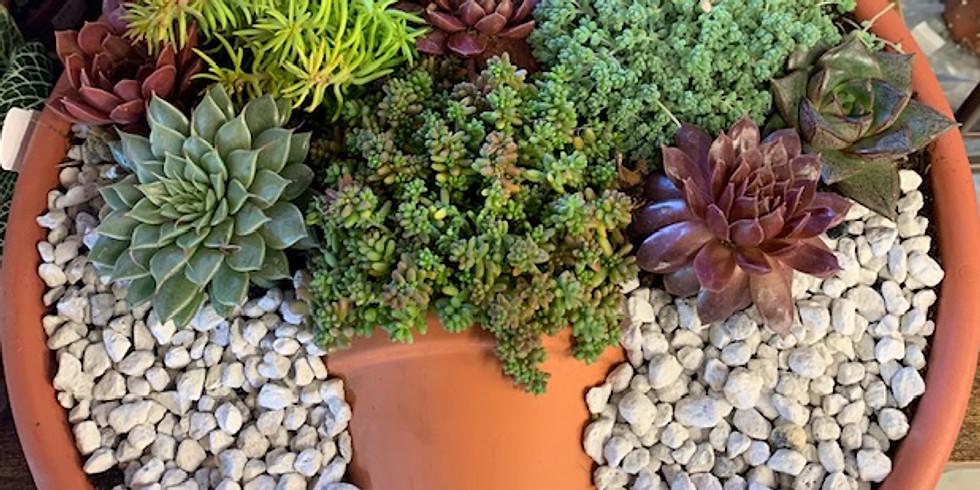Succulent Pot in a Pot Class