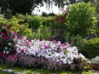 Flower Beds - More than Flowers