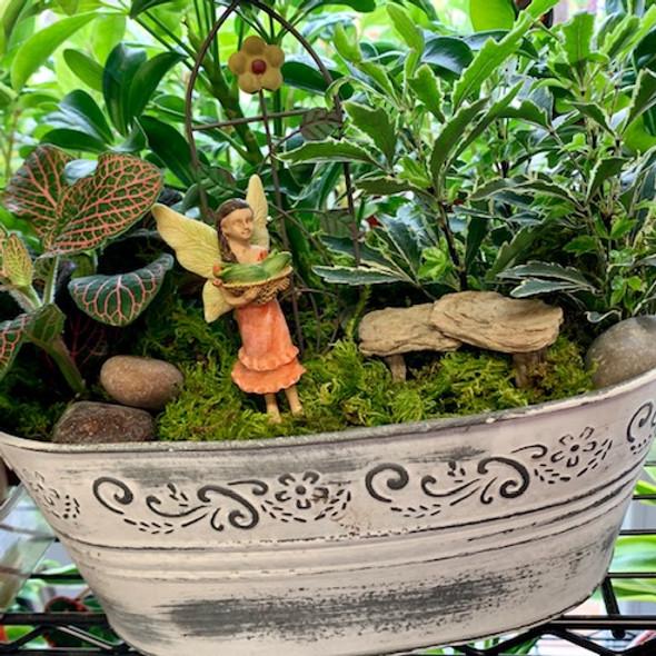 House Plant Fairy Garden Class