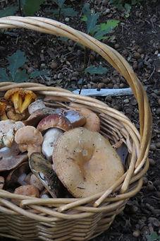 Mushroom Hunting 101