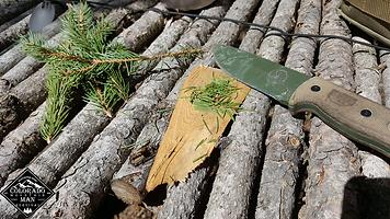Basics of Survival Pine Needle Tea