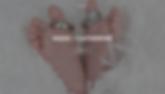 Screen Shot 2019-02-20 at 1.35.34 PM.png