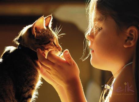 Gatos y alergias: ¿qué relación existe?