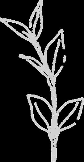 weddingflower6_edited.png