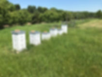 Bee hives 3.jpg