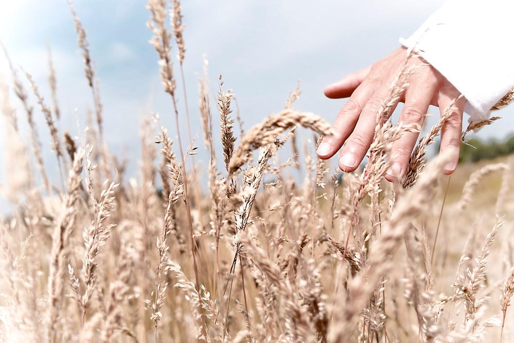 Wild Harvesting - Nattura Beauty Products