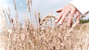 Wild Harvesting