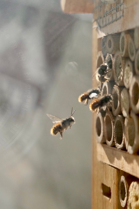 Series of Bees_2