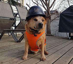 Safety Dog Cuda_edited.jpg