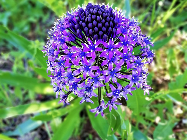 Incredible Flower