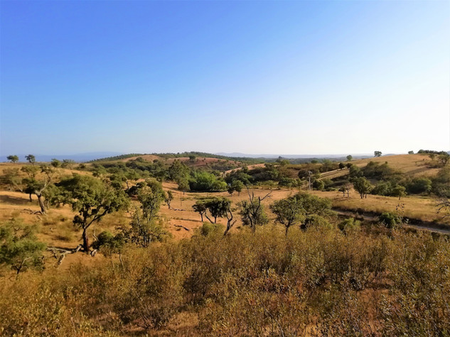 Landscape from Casa Nacura