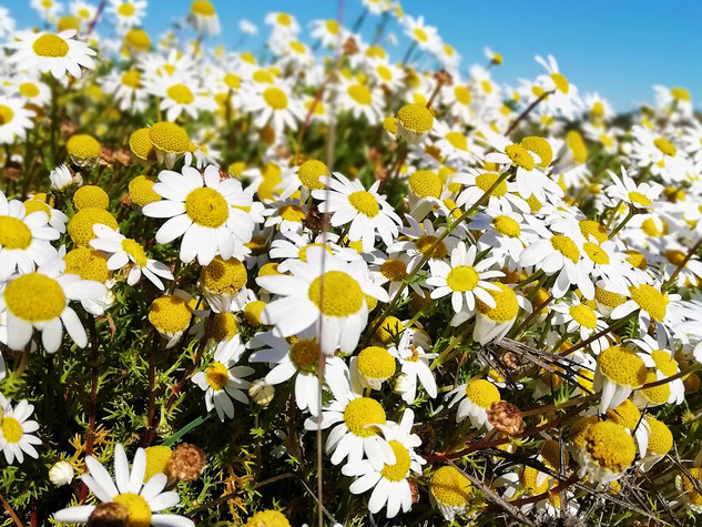 Winter Flowers