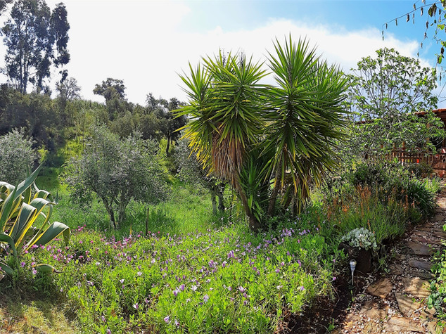 Garden and Landscape from Casa Nacura