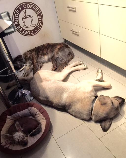 Müde Hundebande