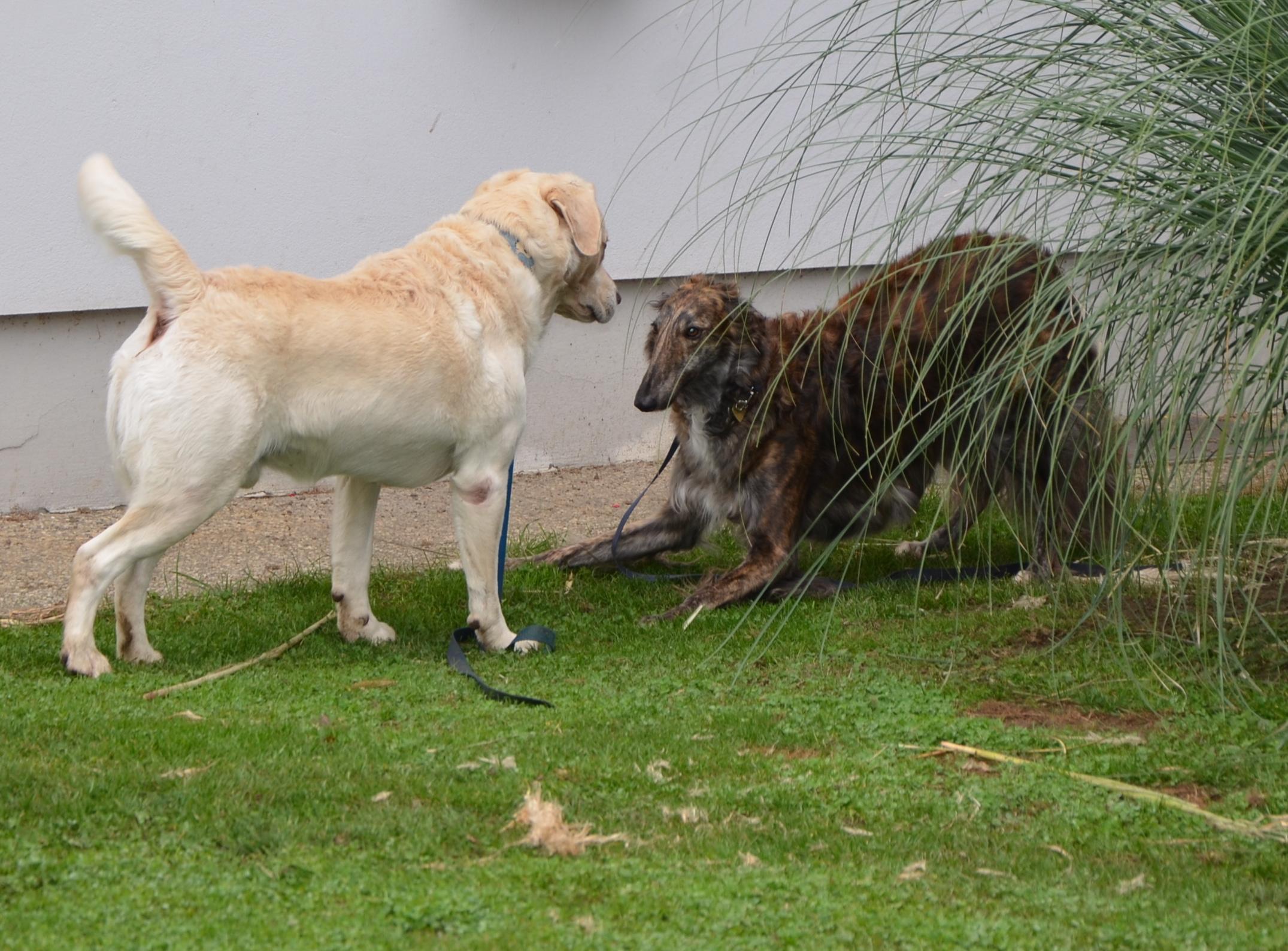 Thimo (Pensionsgast) & Nikita