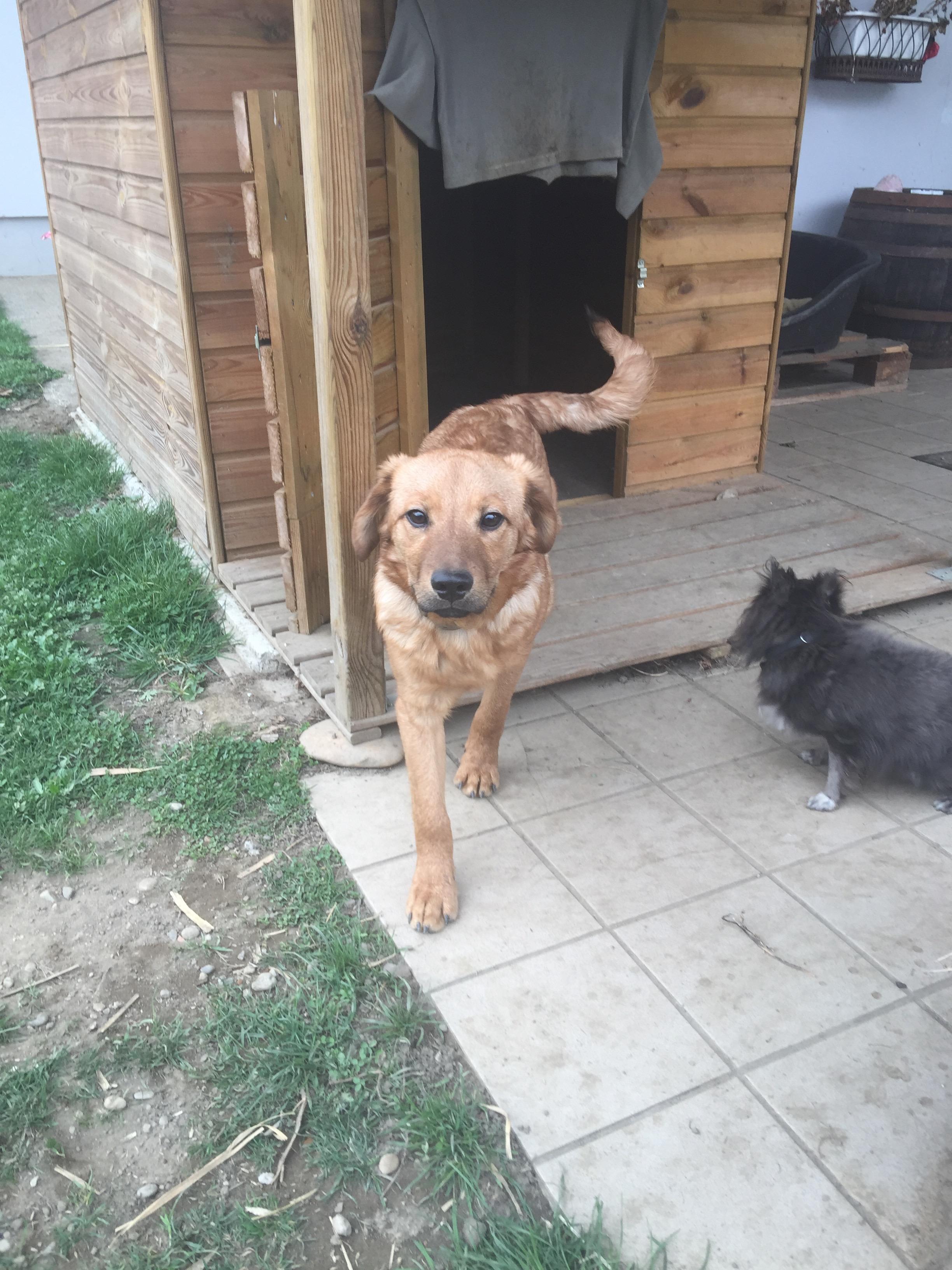 Pablo mit Lupo