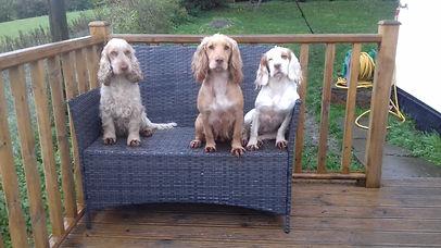 Spaniels on Bench.jpg