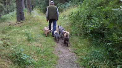 dogs at heel - Clocaenog.jpg