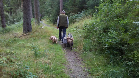 Dogs at heel2 clocaenog.jpg
