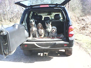 Dogs sit and stay in car