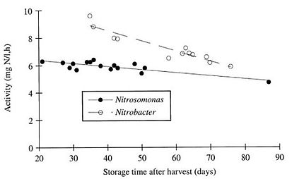 Effect of storage time on nitrogen removal activity