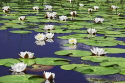 Traitement biologique bassins - Lyve