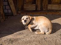 Little beige scared dog. Frightened dog